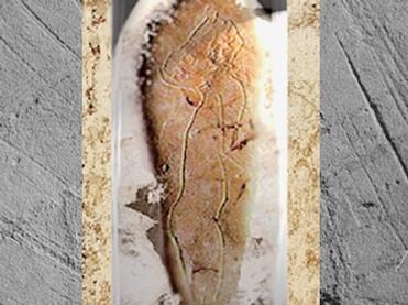 D'après un nu féminin, galet gravé, La Madeleine, magdalénien, Dordogne, France, paléolithique. (Marsailly/Blogostelle)