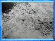 D'après une tête de cheval, gravure, grotte des Trois-Frère, Ariège, France, Magdalénien, paléolithique supérieur. (Marsailly/Blogostelle)
