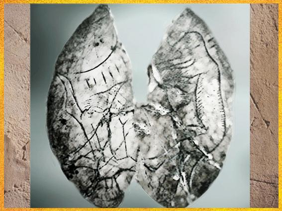D'après une rondelle, os gravé, graphismes et personnage à museau, Mas-d'Azil, Ariège, Magdalénien France, paléolithique, supérieur. (Marsailly/Blogostelle)