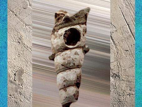 D'après une pendeloque, coquillage, élément de parure, Abri de la Gravette, Dordogne, France, paléolithique. (Marsailly/Blogostelle)