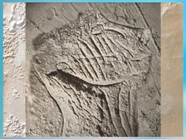 D'après une gravure sur bloc,  visage strié,,  magdalénien grotte de La Marche, France, paléolithique supérieur. (Marsailly/Blogostelle)