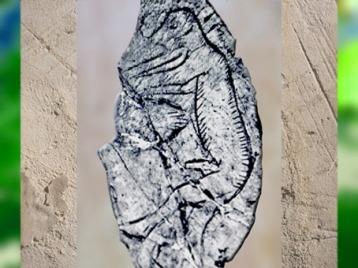 D'après un personnage masculin avec museau, os gravé, Mas-d'Azil, Ariège, Magdalénien, France, paléolithique supérieur. (Marsailly/Blogostelle)
