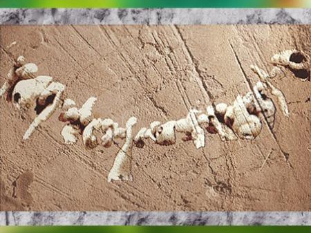 D'après un collier de coquillages, art aurignacien, vers 35000-30000 ans avjc, grotte de Castanet, Dordogne, France, paléolithique supérieur. (Marsailly/Blogostelle)