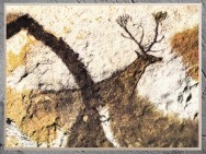 D'après un grand cerf, grotte de Lascaux, vers 18 000 avjc, Magdalénien, Dordogne, France, Paléolithique supérieur. (Marsailly/Blogostelle)