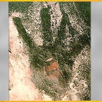 D'après une main en négatif, peinture rupestre, grotte de Gargas, 27 000 avjc, gravettien, Hautes-Pyrénées, France, paléolithique supérieur. (Marsailly/Blogostelle)