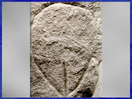 D'après un bloc gravé, représentation vulvaire, Tuc d'Audoubert, Ariège, France, paléolithique supérieur. (Marsailly/Blogostelle)