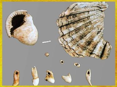 D'après des éléments de parure, dents de bovidé, de renne, de canidé, et coquillages perforés, paléolithique supérieur. (Marsailly/Blogostelle)