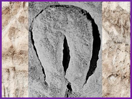 D'après un bloc sculpté, motif vulvaire, abri-du-Cellier, Tursac Dordogne, aurignacien, paléolithique supérieur. (Marsailly-Blogostelle)