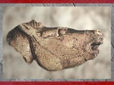 D'après un cheval hénissant, sculpture sur os, Mas-d'Azil, Ariège, Magdalénien, 18000-10000 avjc, France, Paléolithique supérieur. (Marsailly/Blogostelle)
