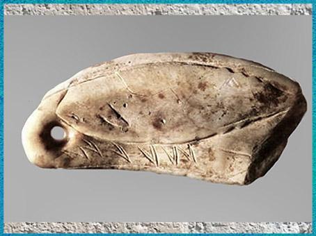 D'après un élément de parure, dent de cachalot percée et gravée, revers, cétacé, grotte de Las Caldas, vers 14 600-14200 avjc, magdalénien, paléolithique supérieur. (Marsailly/Blogostelle)