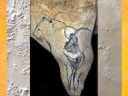 D'après une évocation féminine, bison et lion, grotte Chauvet, vers 36 000 ans avjc, aurignacien, Ardèche, France, paléolithique. (Marsailly/Blogostelle)