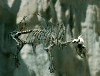 D'après le squelette d'un bison, Dordogne, France. (Marsailly/Blogostelle.)