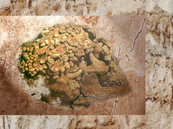 D'après un crâne paré d'ocre rouge et de coquillages, grottes de Grimaldi, aurignacien, vers 35 000- 30 000 ans avjc, Italie. (Marsailly/Blogostelle.)