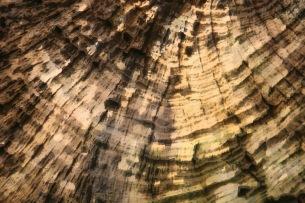 La dendrochronologie se fonde sur la croissance des arbres. (Marsailly/Blogostelle.)