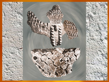 D'après des tessons de poterie, céramique cardiale, motifs coquillages, Sud de la France, néolithique. (Marsailly/Blogostelle)