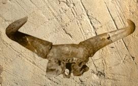 D'après un thème mythologique fréquent dans le monde néolithique : les crânes de bovidés, les cornes et les bucranes... (Illustration Marsailly/Blogostelle.)