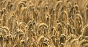 D'après le cycle végétal de la graine qui inspire la mythologie, sans doute dès le Néolithique. (Marsailly/Blogostelle)