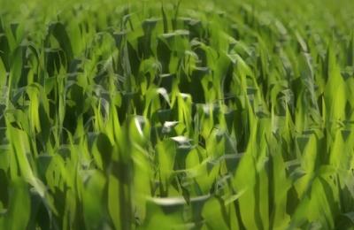 D'après le thème de l'agriculture, qui révolutionne le mode de vie et de pensée néolithiques. (Marsailly/Blogostelle)