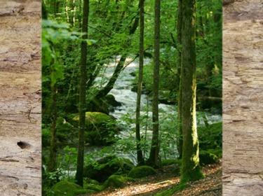 D'après les forêts de la Gaule celtique, qui favorisent l'épanouissement des forges gourmandes en bois. (Marsailly/Blogostelle)