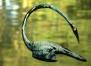 La Tène, casque-oiseau (Marsailly/Blogostelle)