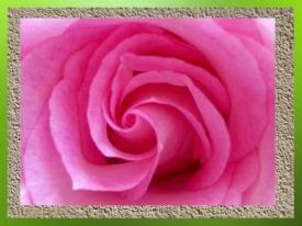 D'après le mouvement en spirale,au cœur de la Rose...(Marsailly/Blogostelle)