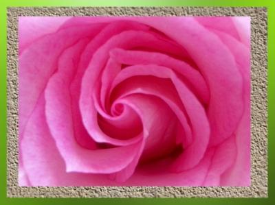 D'après le mouvement végétal en spirale,au cœur de la Rose...(Marsailly/Blogostelle)