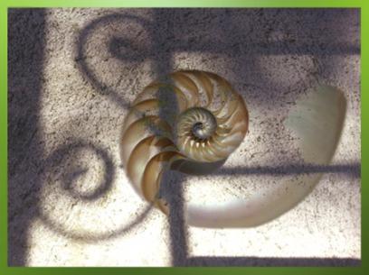 D'après la coquille spiralée des escargots. (Marsailly/Blogostelle)