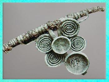 D'après une fibule à cupules et à spirales,VIIe -VIe siècle avjc, civilisation de Hallstatt,premier âge du Fer. (Marsailly/Blogostelle)
