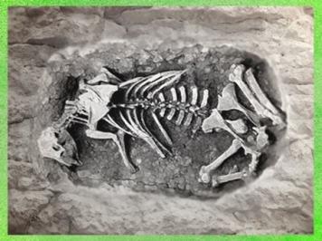 D'après un bovidé inhumé dans la fosse cultuelle d'un sanctuaire celte. (Marsailly/Blogostelle)