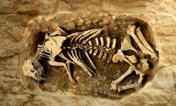 D'après un bovidé inhumé dans la fosse cultuelle d'un sanctuaire celte. (Marsailly/Blogostelle.)