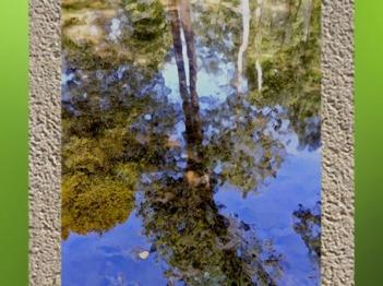 D'après le thème de l'Arbre Inversé, comme l'image d'un arbre qui se reflète dans l'eau... (Marsailly/Blogostelle)