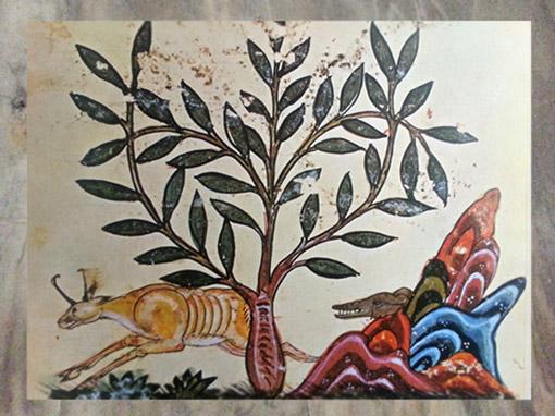 D'après l'Astragale, plante d'Harmonie en Chine, connue pour ses vertus toniques, De Materia Medica, Dioscoride, XIIIe siècle, Bagdad, Irak. (Marsailly/Blogostelle)