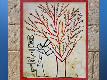 D'après l'Arbre de Vie nourricier, acacia, qui allaite le roi, hypogée de Thoutmosis III, Thèbes, Nouvel Empire, Egypte ancienne.  (Marsailly/Blogostelle)