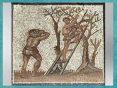 D'après la Cueillette des olives, mosaïque Saint-Romain-en-Gal, IIIe siècle apjc, Vienne, Rhône-Alpes, Gaule Romaine. (Marsailly/Blogostelle)