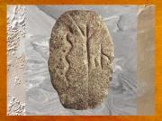 D'après un galet gravé, serpent, arbre et glype (un être humain), Gobleki Tepe, vers 9000 ans avjc, Anatolie, Levant. (Marsailly/Blogostelle)