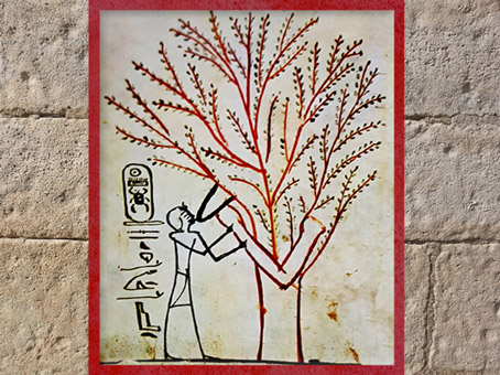 D'après l'arbre sacré, acacia, qui allaite le roi, hypogée de Thoutmès (Thoutmosis ) III, Thèbes, Nouvel Empire, Égypte Ancienne. (Marsailly/Blogostelle)