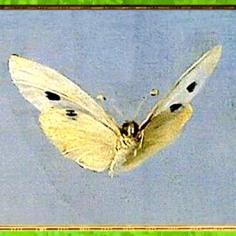 D'après Psyché et Éros, François Gérard, 1798, papillon, France, XVIIIe siècle, Néoclassique. (Marsailly/Blogostelle)