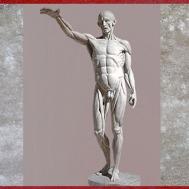 D'après un Écorché, étude d'anatomie, de Jean-Antoine Houdon, 1767, moulage en plâtre, XVIIIe siècle. (Marsailly/Blogostelle)