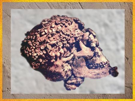 D'après un crâne paré d'ocre rouge et de coquillages, grottes de Grimaldi, aurignacien, vers 35 000- 30 000 ans avjc, Italie, paléolithique. (Marsailly/Blogostelle)