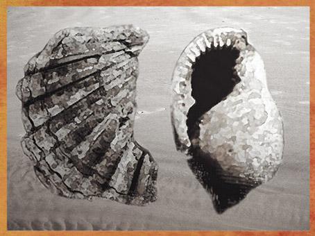 D'après des coquillages, éléments de parure du paléolithique supérieur. (Marsailly/Blogostelle)