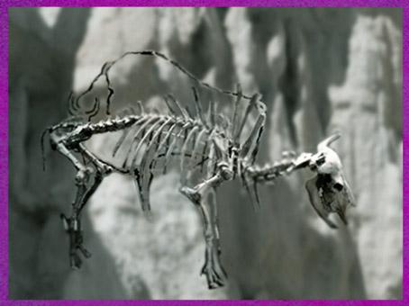 D'après un squelette de bison, Dordogne, France, paléolithique supérieur. (Marsailly/Blogostelle)