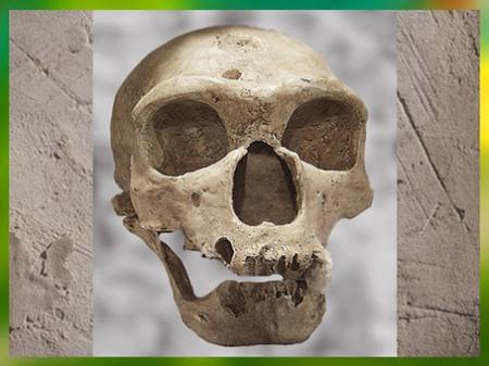 D'après un crâne de Neandertatien, Homo neanderthalensis, La Chapelle-aux-Saints, Corrèze, France, paléolithique. (Marsailly/Blogostelle)