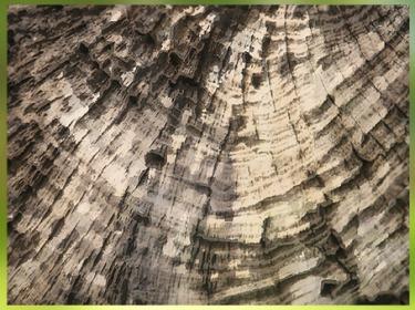 D'après l'étude de la dendrochronologie, fondée sur la croissance des arbres. (Marsailly/Blogostelle)