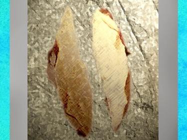 D'après des pointes de Châtelperron, Allier, France, début paléolithique supérieur. (Marsailly/Blogostelle)