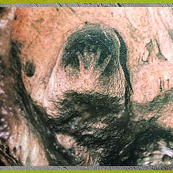 D'après une main en négatif, peinture, grotte de Gargas, 27 000 avjc, gravettien, Hautes-Pyrénées, France, paléolithique supérieur. (Marsailly/Blogostelle)