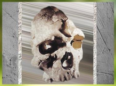 D'après le crâne du Caune de l'Arago, Homo Erectus, daté vers 400 000 - 350 000 avjc, paléolithique inférieur. (Marsailly/Blogostelle)