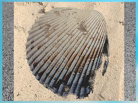 D'après un cardium, coquillage utilisé pour les décors de la céramique cardiale, Sud de la France, néolithique. (Marsailly/Blogostelle)