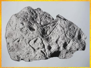 D'après des représentations vulvaires et cupules, aurignacien, La Ferrassie, Dordogne, France, paléolithique supérieur. (Marsailly/Blogostelle)
